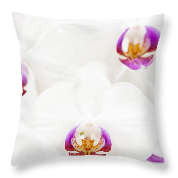 Phalaenopsis Throw Pillow by Anne Gilbert