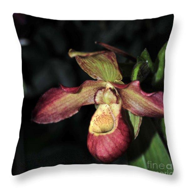 Phragmipedium Noirmont Throw Pillow by Terri Winkler