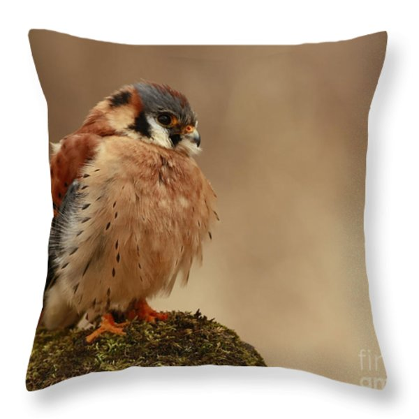 Picture Perfect American Kestrel  Throw Pillow by Inspired Nature Photography By Shelley Myke