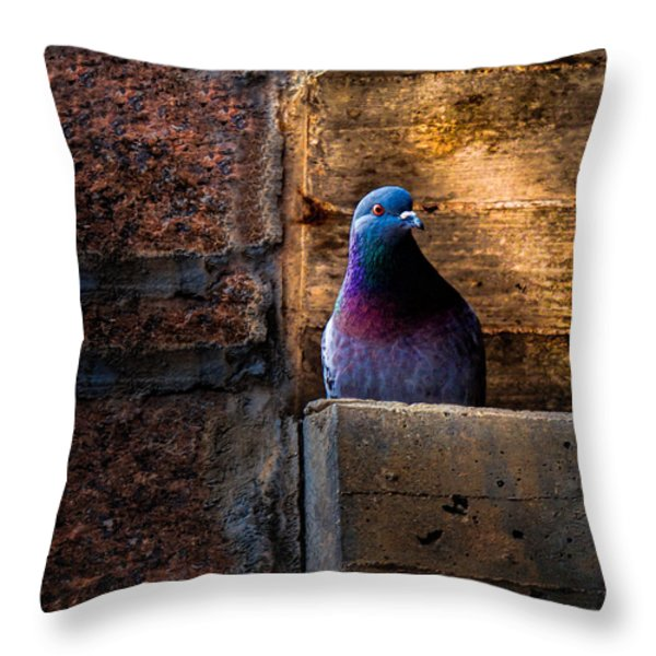 Pigeon of the City Throw Pillow by Bob Orsillo