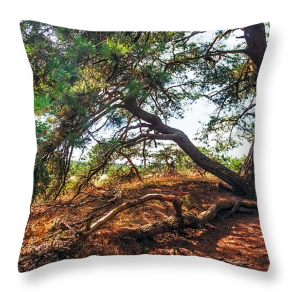 Pine Tree In Hoge Veluwe National Park 2. Netherlands Throw Pillow by Jenny Rainbow