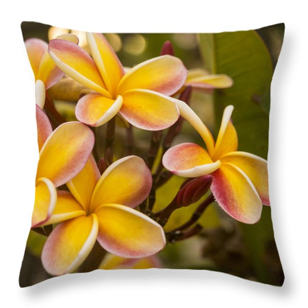 Pink and Yellow Plumeria 2 Throw Pillow by Brian Harig