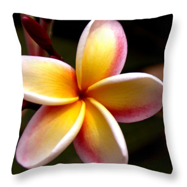 Pink and Yellow Plumeria Throw Pillow by Brian Harig