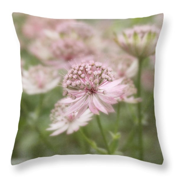 Pink Blush Throw Pillow by Kim Hojnacki
