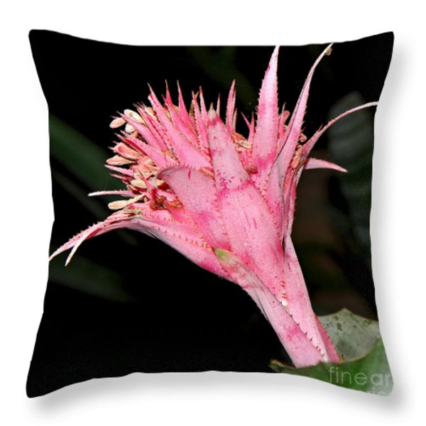 Pink Bromeliad Bloom - Close up Throw Pillow by Kaye Menner