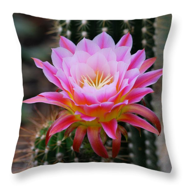 Pink Cactus Flower Throw Pillow by Nancy Mueller