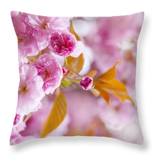 Pink cherry blossoms in spring orchard Throw Pillow by Elena Elisseeva