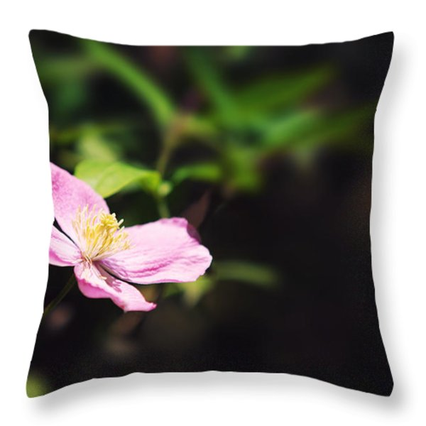 Pink clematis in sunlight Throw Pillow by Jane Rix