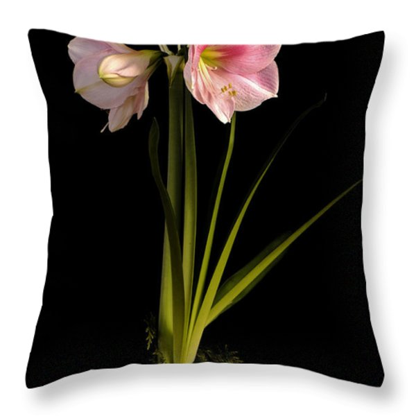 Pink Diamond Amaryllis Throw Pillow by Claudio Bacinello