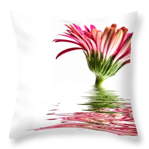 Pink Gerbera Flood 3 Throw Pillow by Steve Purnell