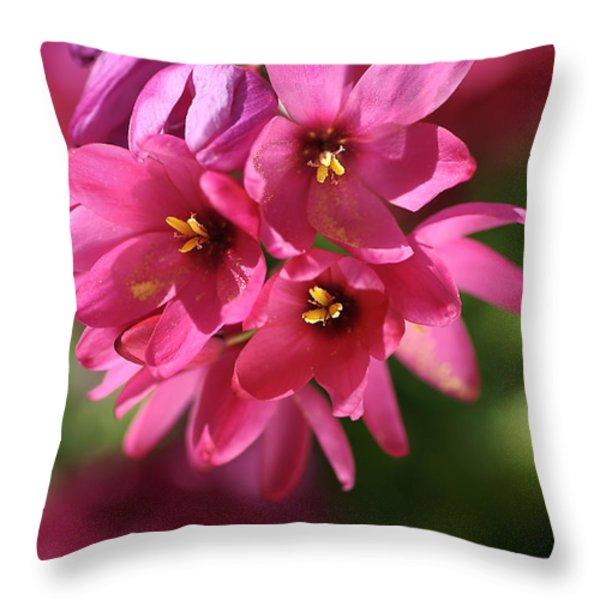 Pink Ixia Throw Pillow by Joy Watson