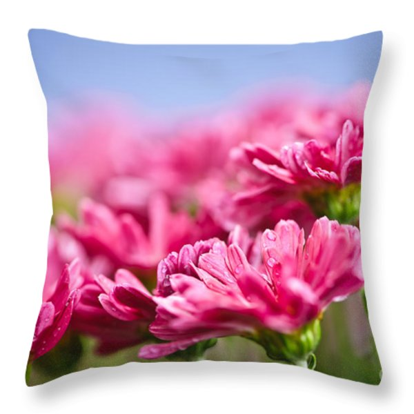 Pink mums Throw Pillow by Elena Elisseeva