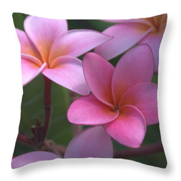 Pink Plumeria Throw Pillow by Brian Harig