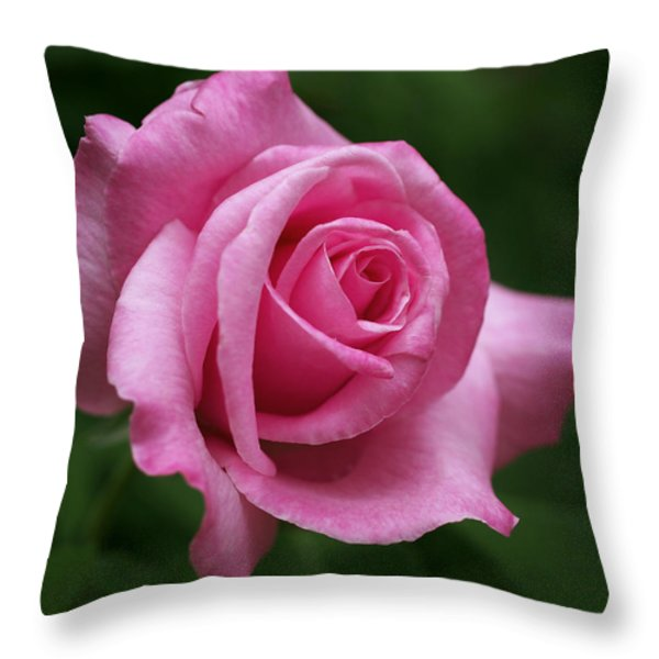 Pink Rose Perfection Throw Pillow by Rona Black