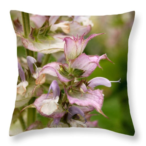 Pink Summer Sage Throw Pillow by Eva Kaufman