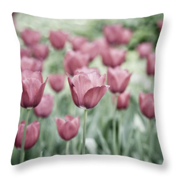Pink Tulip Field Throw Pillow by Frank Tschakert