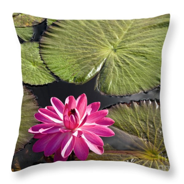 Pink Water Lily II Throw Pillow by Heiko Koehrer-Wagner
