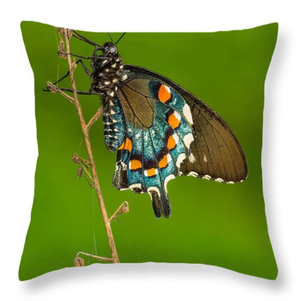 Pipevine Swallowtail Throw Pillow by Anthony Heflin