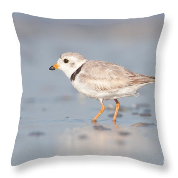 Piping Plover II Throw Pillow by Clarence Holmes