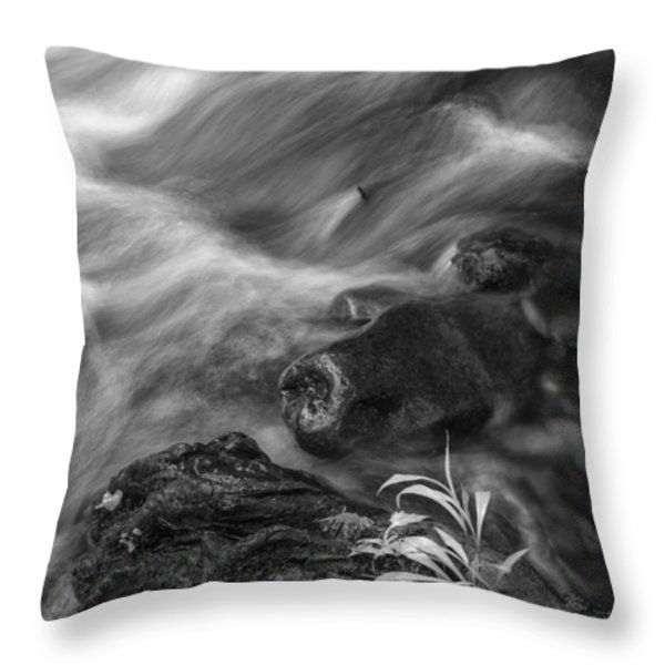 Little Plant Throw Pillow by Jon Glaser