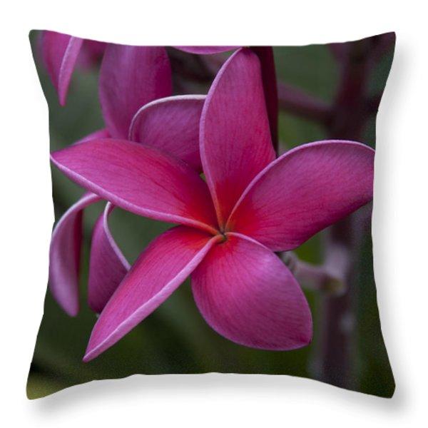 Plumeria Throw Pillow by Randy Bayne