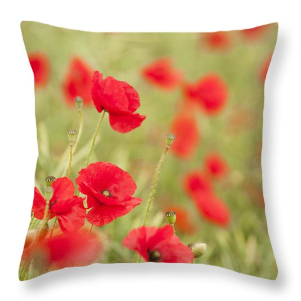 Poppy Red Throw Pillow by Anne Gilbert
