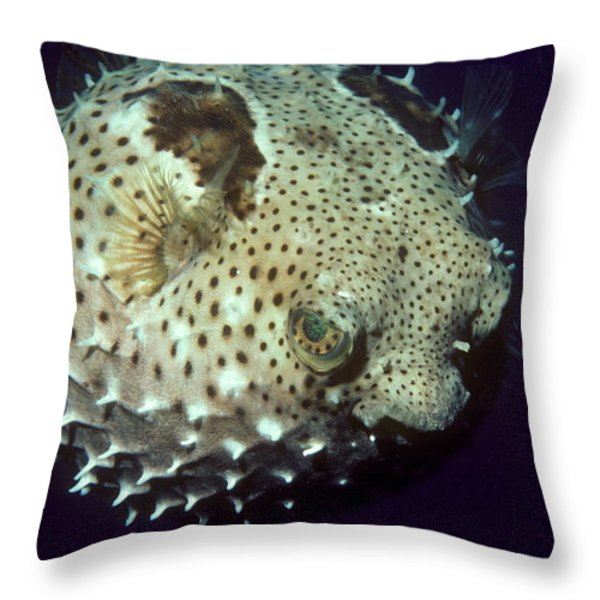 Porcupinefish Throw Pillow by Gregory G. Dimijian