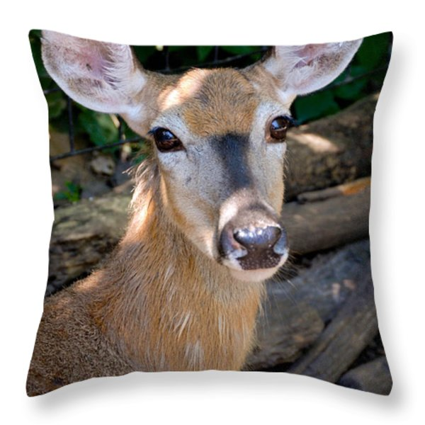Portrait of a Deer Throw Pillow by Amy Cicconi