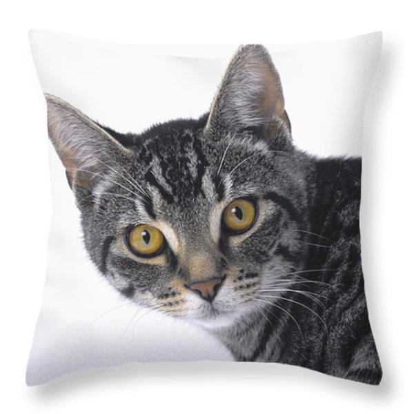 Portrait Of A Grey Tabby Catvancouver Throw Pillow by Thomas Kitchin & Victoria Hurst