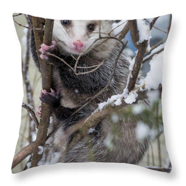 Possum Throw Pillow by Steven Ralser