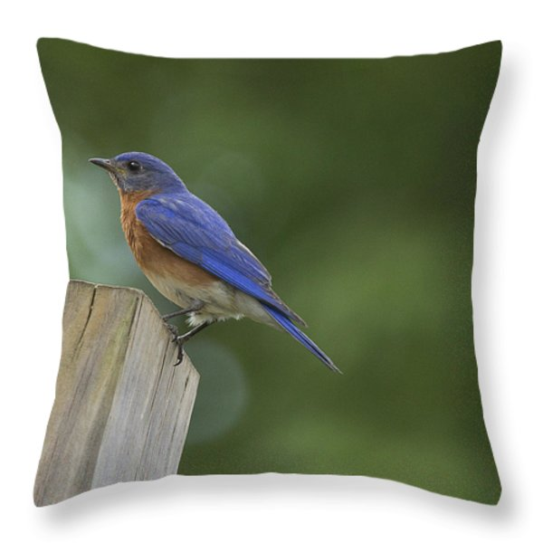 Powder Blue Throw Pillow by Cris Hayes