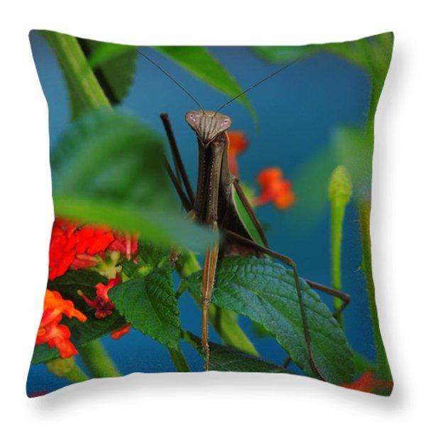 Praying Mantis Throw Pillow by Raymond Salani III