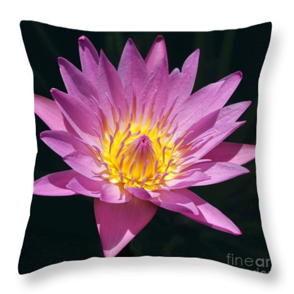 Pretty In Pink And Yellow Water Lily Throw Pillow by Sabrina L Ryan