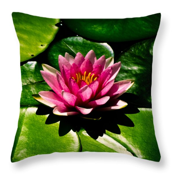Pretty in Pink Throw Pillow by Christi Kraft