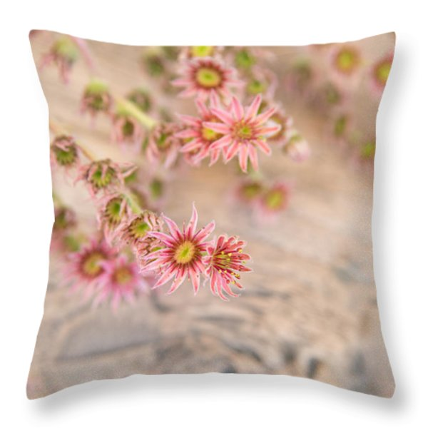 Pretty Pink Flowers Throw Pillow by Matthias Hauser