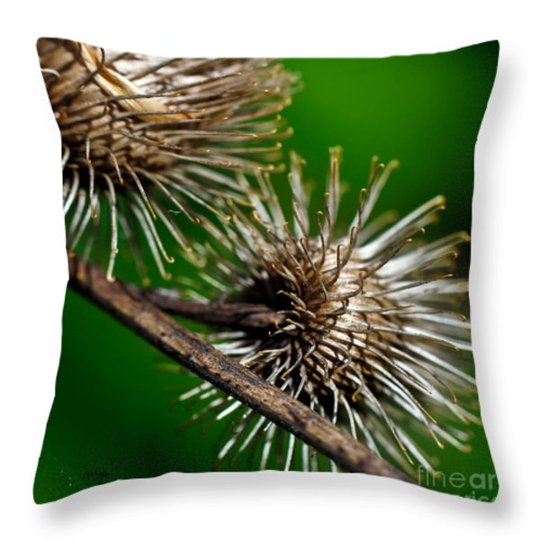Prickly Throw Pillow by Lois Bryan