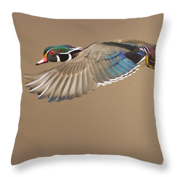Probably the most beautiful of all duck species Throw Pillow by Mircea Costina Photography
