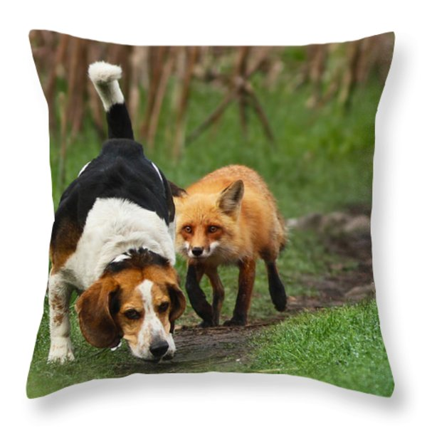 Probably the World's Worst Hunting Dog Throw Pillow by Mircea Costina Photography