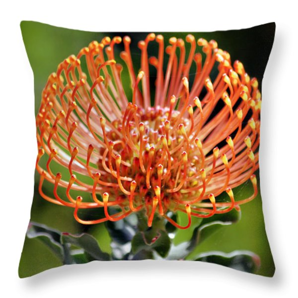Protea - One of the Oldest Flowers on Earth Throw Pillow by Christine Till