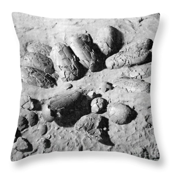 Protoceratops Eggs Cretaceous Dinosaur Throw Pillow by Science Source