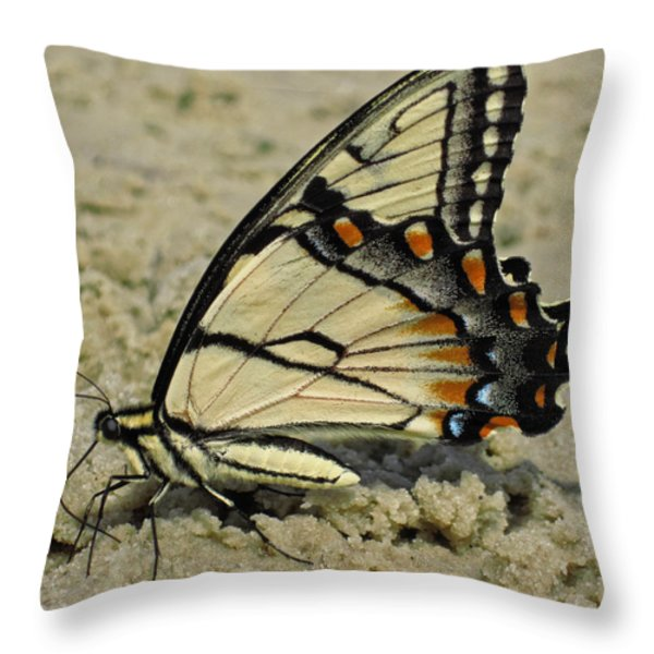 Puddling Eastern Tiger Swallowtail Butterfly Throw Pillow by Lara Ellis