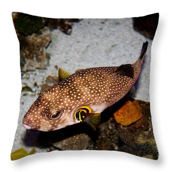 Pufferfish 5D24157 Throw Pillow by Wingsdomain Art and Photography