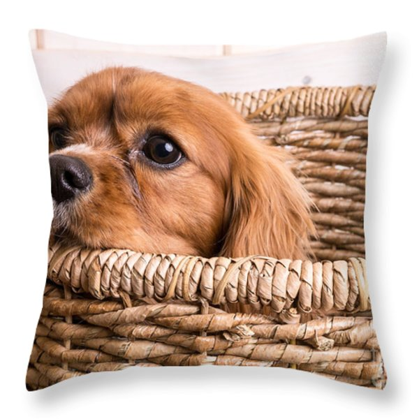 Puppy In A Laundry Basket Throw Pillow by Edward Fielding