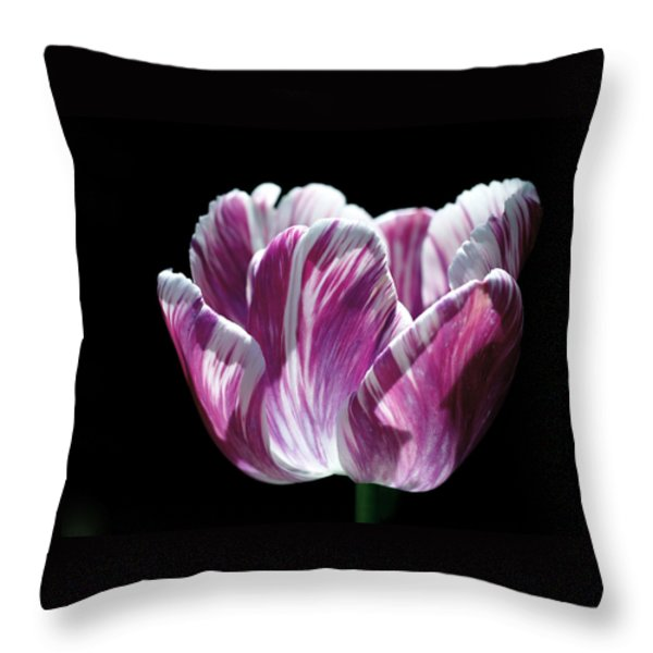 Purple and White Marbled Tulip Throw Pillow by Rona Black