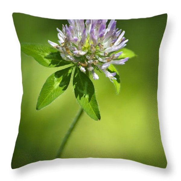 Purple Clover Flower Throw Pillow by Christina Rollo