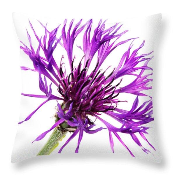Purple Cornflower Throw Pillow by Jo Ann Snover