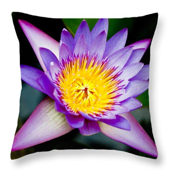 Purple lotus  Throw Pillow by Raimond Klavins