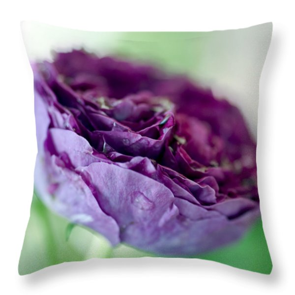 Purple Rose Throw Pillow by Frank Tschakert