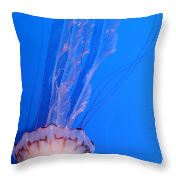 Purple Striped Jelly Fish 5D24934 Throw Pillow by Wingsdomain Art and Photography