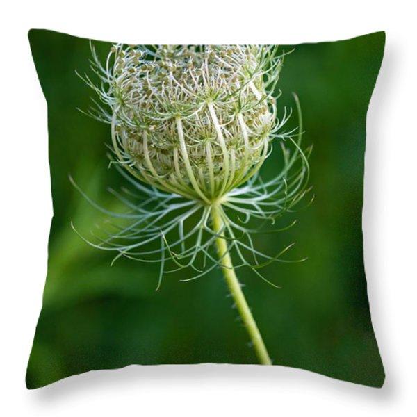 Queen Anne's Lace 2 Throw Pillow by Steve Harrington